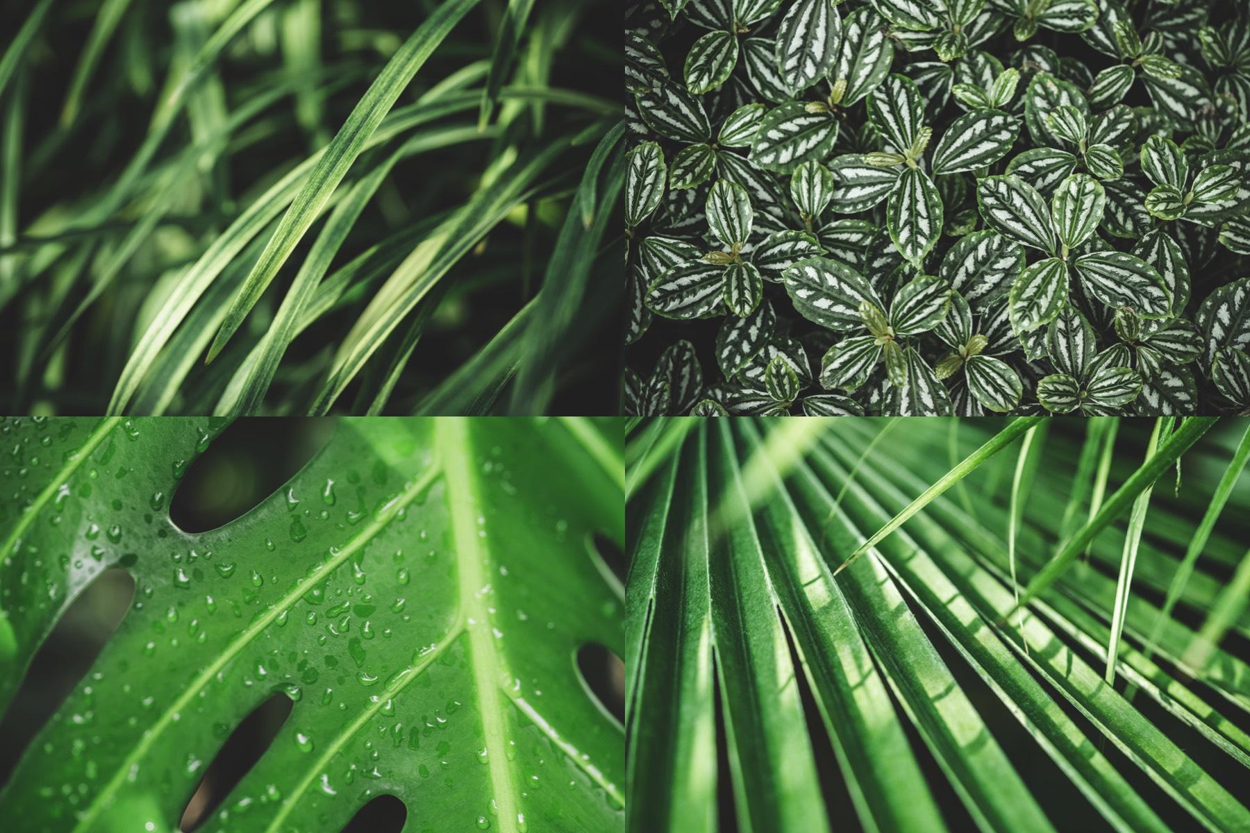botanic-garden-preview-1