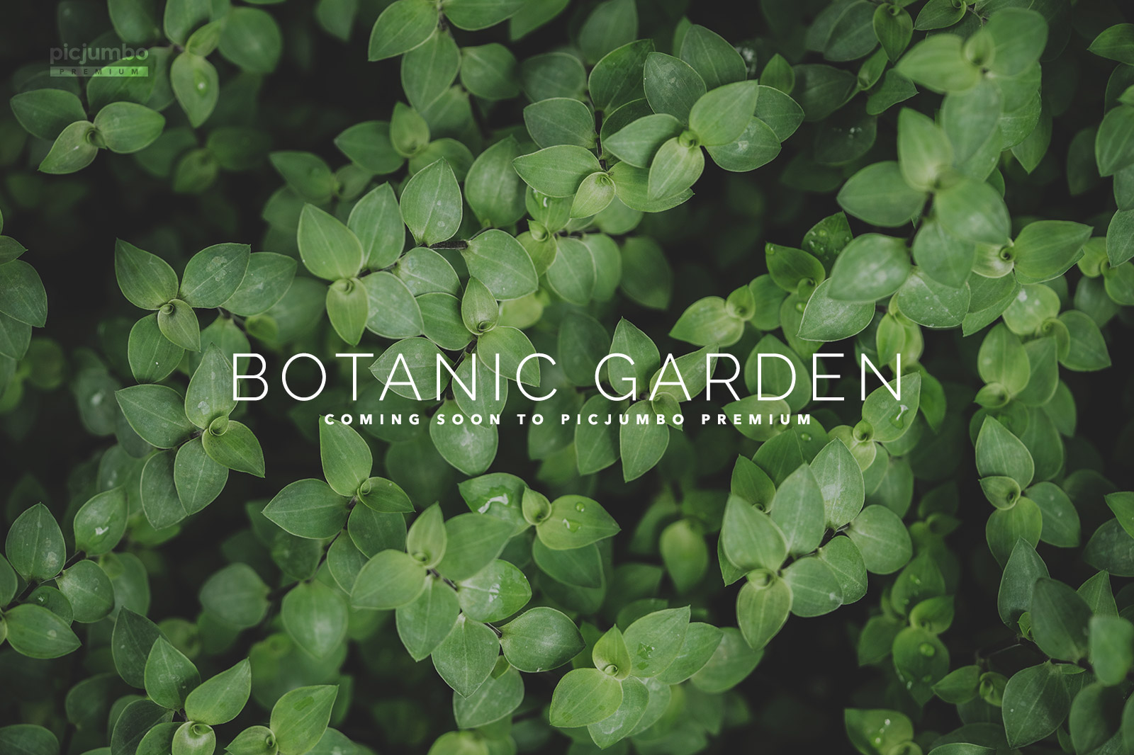 coming-soon-botanic-garden-collection