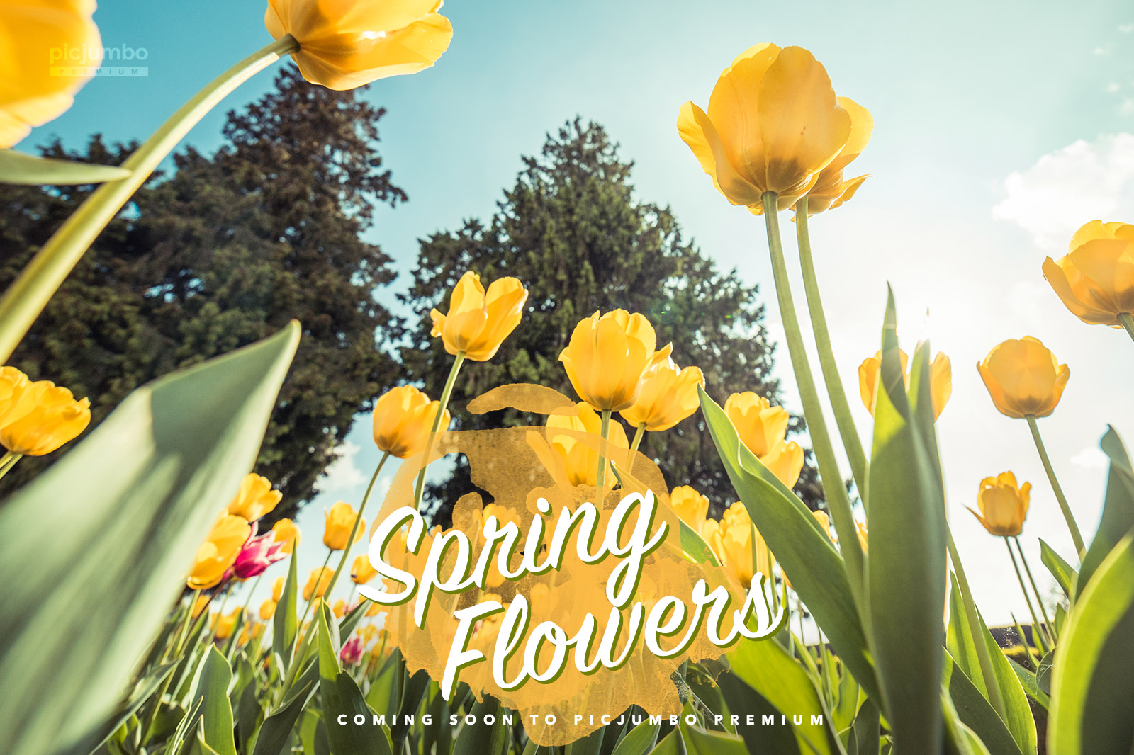 coming-soon-spring-flowers-collection