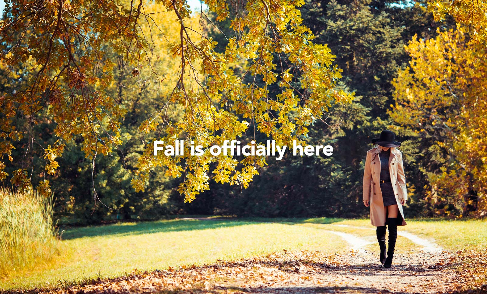 Fall is officially here — picjumbo BLOG