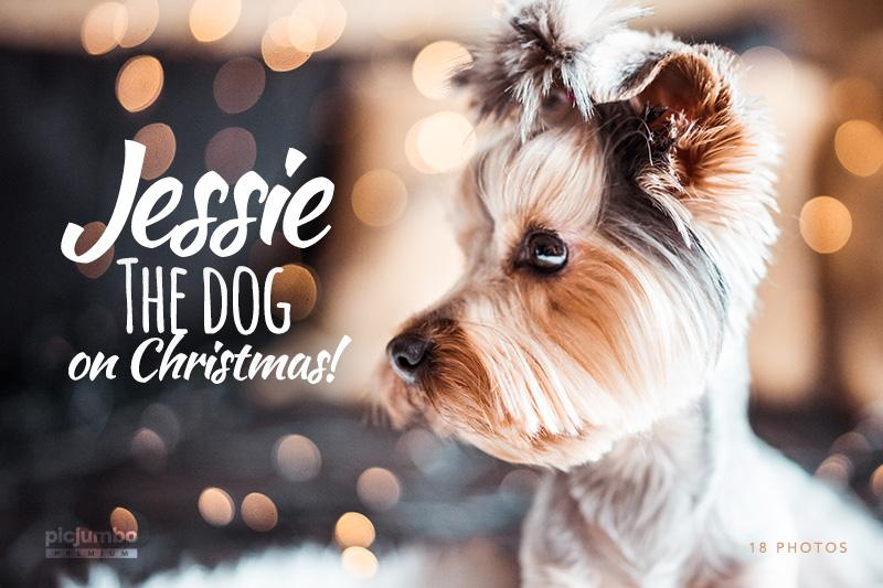 picjumbo-premium-jessie-the-dog